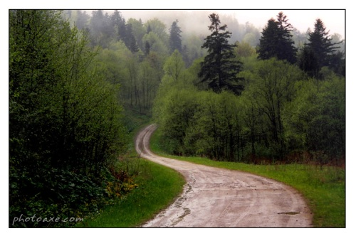 forest_road