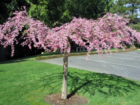 spring_tree2