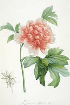 littleflower