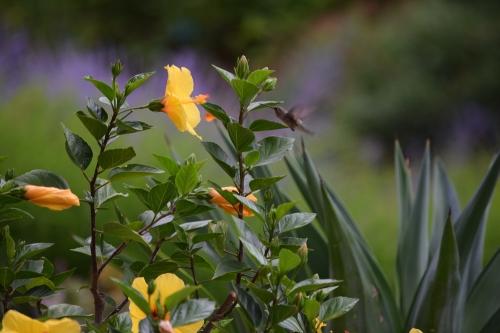 Photograph taken a Red Butte Garden in Salt Lake City.