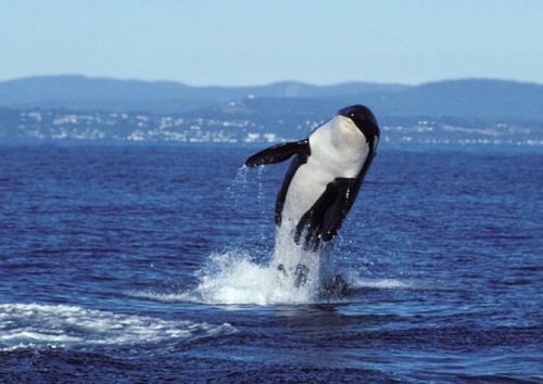 granny-orca-network