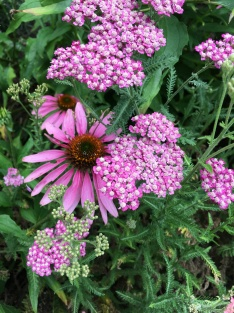 July blooms1
