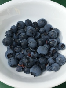 Our own blueberries July 2019