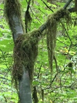 """On the trail """"Hall of Mosses"""""""
