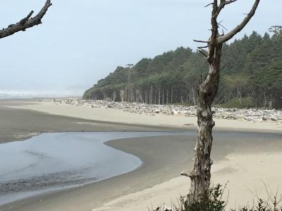 Beach at Kalaloch