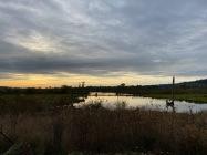 Fern Hill Wetlands